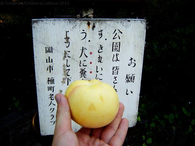 Okayama - Shiromomo